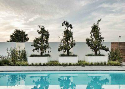 Prägnante Blickfänge – Weiße Pflanzkübel mit knorrigen Birnenbäumen