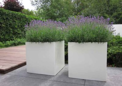 Blütenreich – Die üppige Lavendelbepflanzung passt perfekt zu den Kübeln